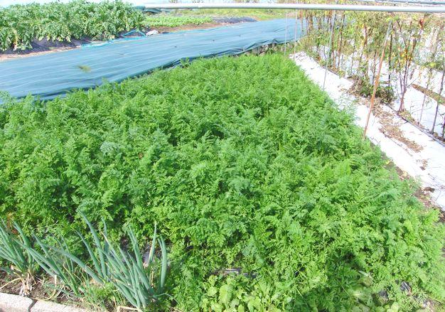 2014畑の野菜.jpg