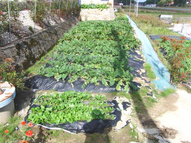 2014畑の野菜2.jpg