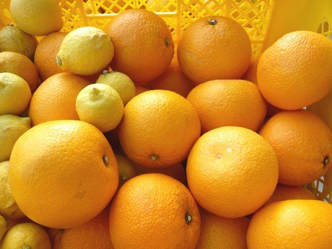2015因島はっさくレモン.jpg