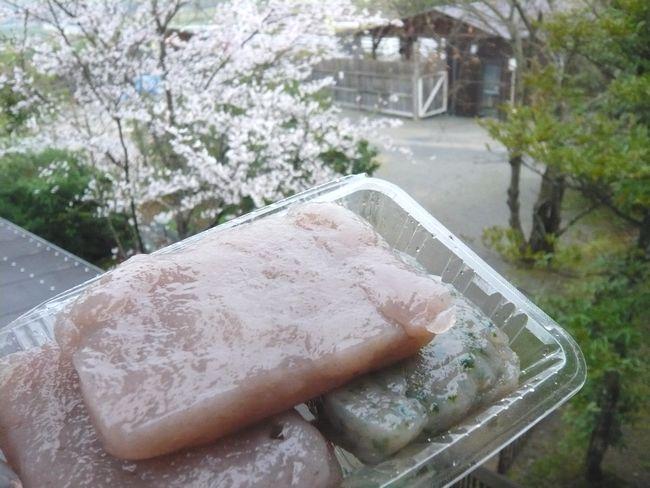 2015年4月こんにゃく.jpg