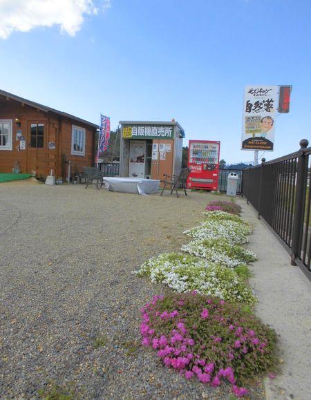 2015年4月芝桜1.jpg