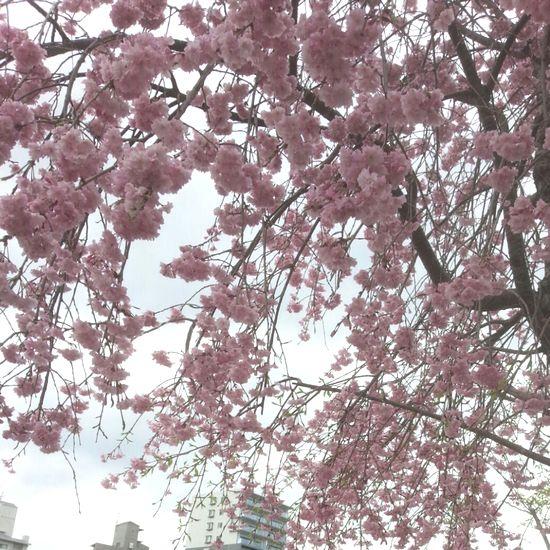 2015年4月5日広島1.jpg