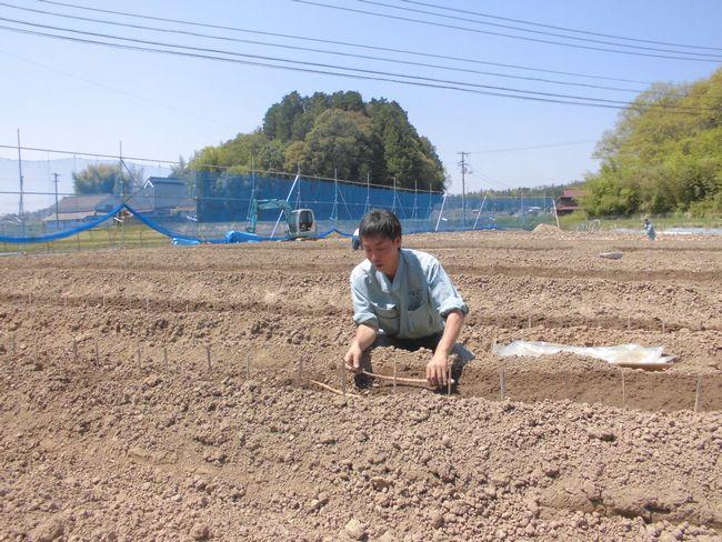 2015種芋定植.jpg