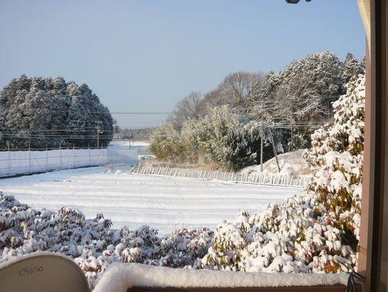 2016年1月25日朝の雪.jpg