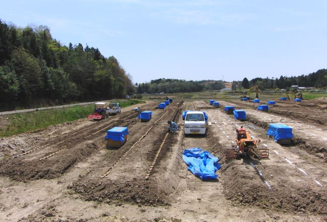 2016年4月の新自然薯畑.jpg