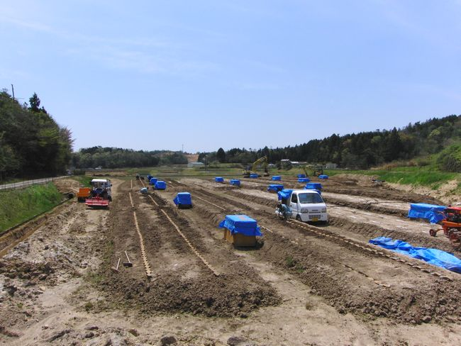 2016年4月の新自然薯畑1.jpg
