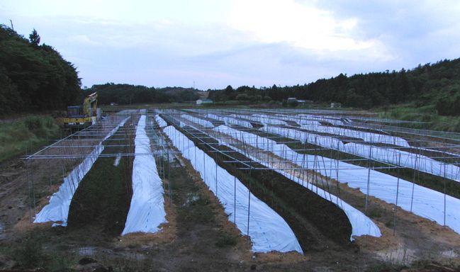 2016年6月9日新しい自然薯畑.jpg