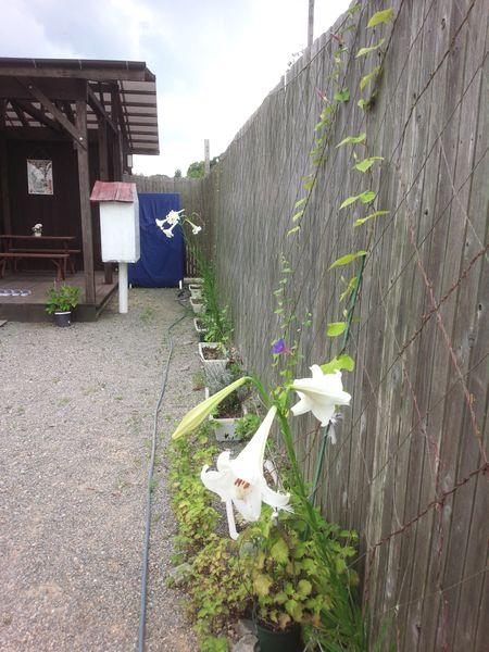 2016年8月後半直売所の庭.jpg