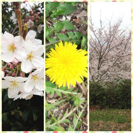 2016春の花.jpg
