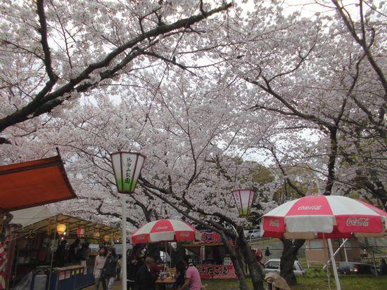 2016花見3.jpg