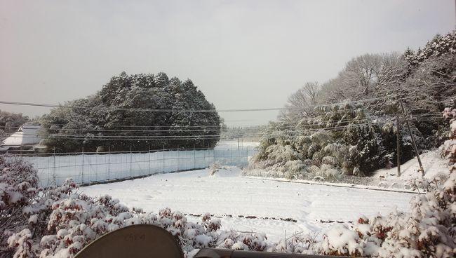2017年1月自然薯畑.jpg