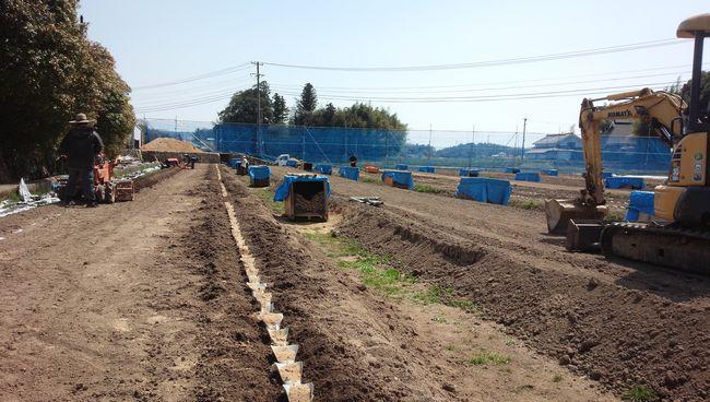 2018春自然薯畑1.jpg