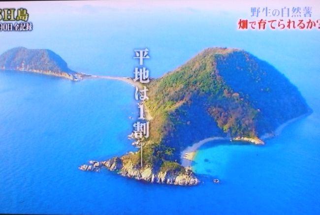 2018DASH島1.JPG