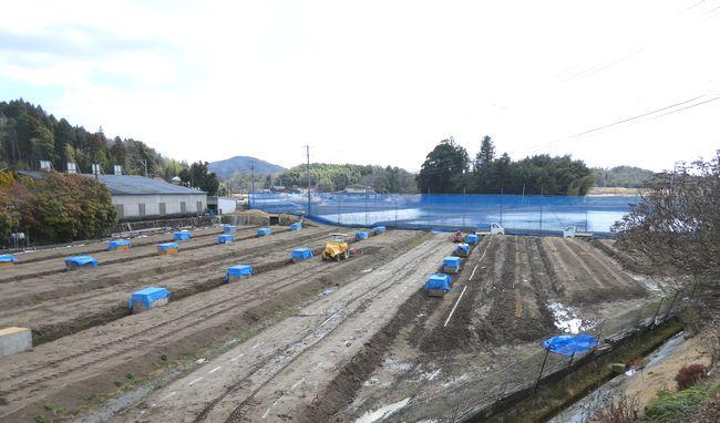 3月13日の自然薯畑.jpg