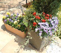 4月の花.jpg