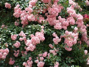 6月の花.jpg