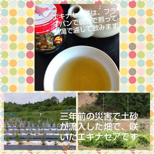 2021エキナセア茶1