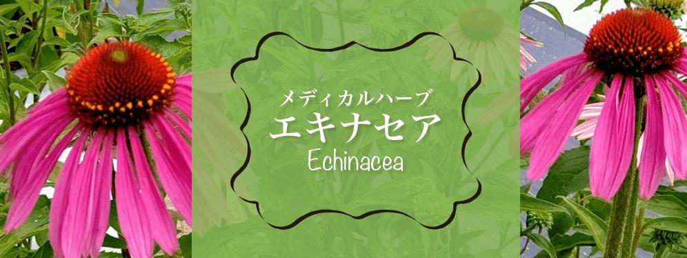 広島県三原市の久井高原ハーブティー